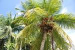 maldivu2008_11