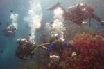 Группа под водой